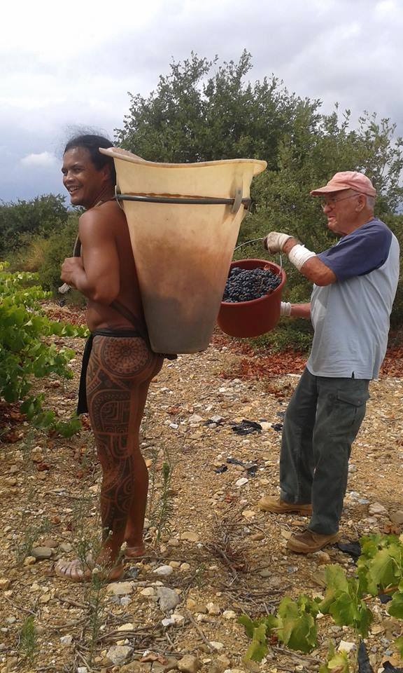 Quand un Polynésien fait les vendanges en France en tenue traditionnelle