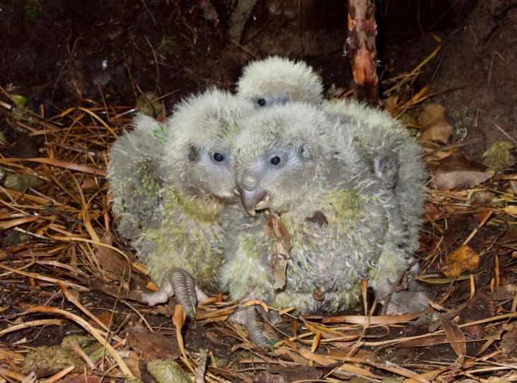 (Crédit photo : ANDREW DIGBY / New Zealand Department of Conservation / AFP)