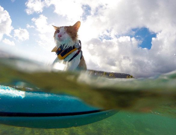 Source photo : Instagram Kuli the surfing cat